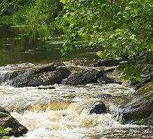 Unami Creek at Trinity Bridge #1 by MotherNature