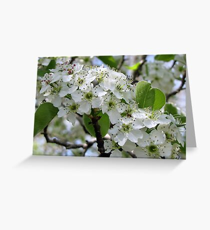 Spring Glory Greeting Card