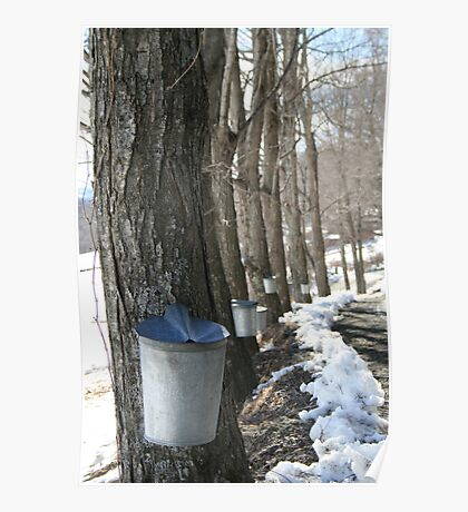 Sugaring Day Poster