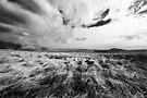 WIndswept by David Robinson
