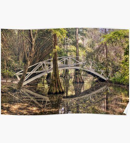 Cypress Swamp - Magnolia Plantation and Gardens Poster