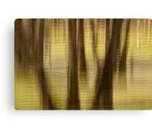 Cypresses - Magnolia Plantation and Gardens Canvas Print