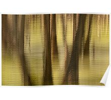Cypresses - Magnolia Plantation and Gardens Poster