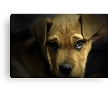 Puppy Eyes Canvas Print
