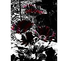 Figure It Out Flowers Photographic Print