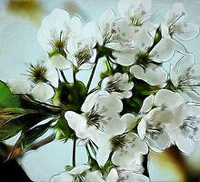 ~ Cherry Blossoms ~ by Brenda Boisvert
