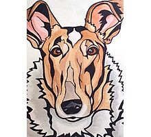 Dog Art #8: Cassidy the Smooth Collie Photographic Print