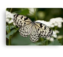 Paper Kite Butterfly - Idea leuconoe Canvas Print
