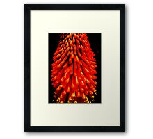 Red Hot Poker Insight Framed Print