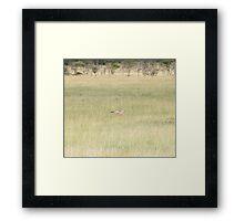 Jackal, jogging Framed Print