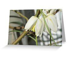 Snowwhite in Spring Greeting Card