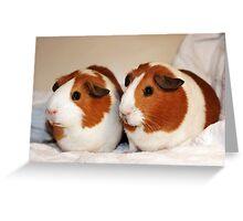 Gorgeous Girly Guinea Piggies! Greeting Card