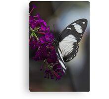 Butterfly - Carleton University, Ottawa, Ontario Metal Print