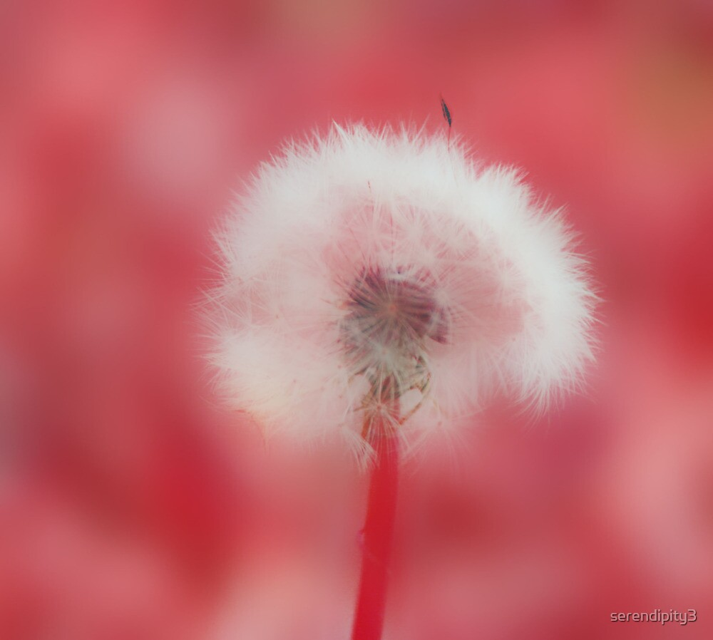 Springs Fluff by serendipity3