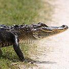 Alligator 5 by Howard & Rebecca Taylor