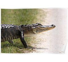 Alligator 5 Poster