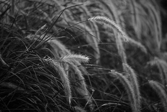 Morning Dew by Crispin  Gardner IPA