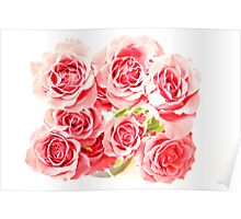 Rose Blooms Poster