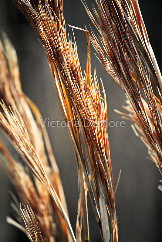 Amber Waves of Grain by Victoria DeMore