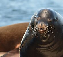 California Sea Lion by NAmelotte