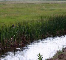 irrigation by Krista Corner