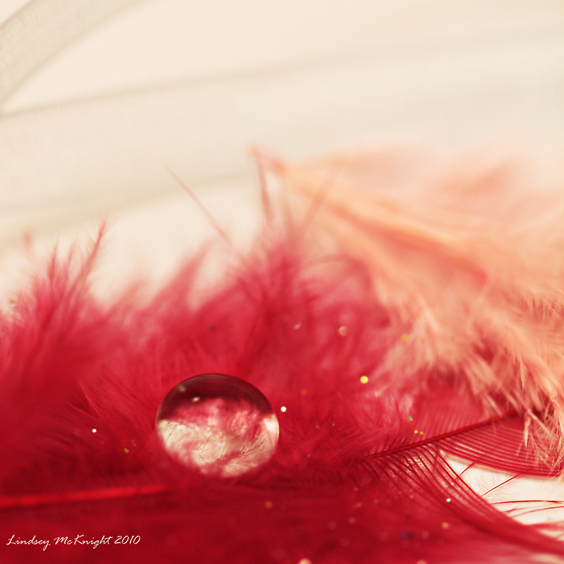Feathers and Lace IV by Lindsey McKnight