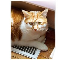 Cat on a Hot Tin Vent Poster