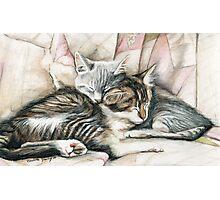 Sleeping Kittens Photographic Print
