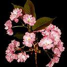 Spring Blooms by Stephen D. Miller