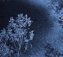 Quiet Ride On A Moonlit Lake by CarolM
