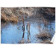 Two Reed in a Pond Poster