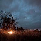 Bright Lights, Big Fields by Daniel Wills