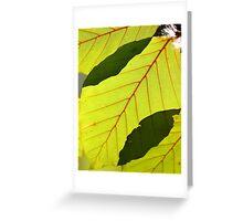 Beech leaves Greeting Card