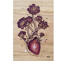 Aeonium Heart Photographic Print