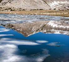 REFLECTIONS AND ICE by joseph s  giacalone