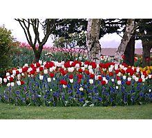 Tulip Festival Photographic Print
