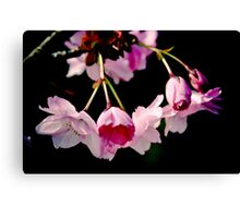 Pink in the dark Canvas Print