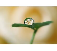 Rose and clover Photographic Print