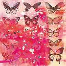 Butterfly's  by Carolynne