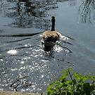 I AM the magic goose... by supernan