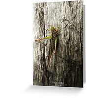 Its a bug eat bug world out there Greeting Card