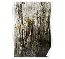 Its a bug eat bug world out there Poster