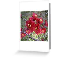 Japonica Greeting Card