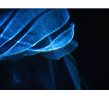 The Blue Light III Photographic Print