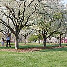 Walk in the Park by mwfoster