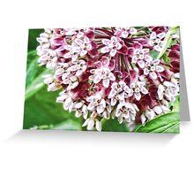 Milkweed flower Greeting Card