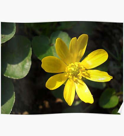 Yellow Flower. Poster