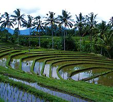 Bali Rice by Peter Doré