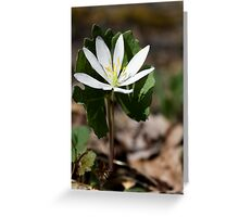 Bloodroot Flower Greeting Card