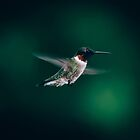 Ruby Throated Hummingbird by AlixCollins